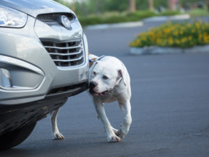 Use of Canines at Traffic Stops